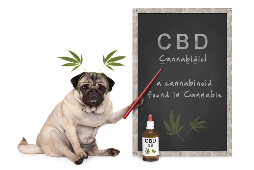 Pet Care: The Truth About Using CBD Oil For Your Animal's Health