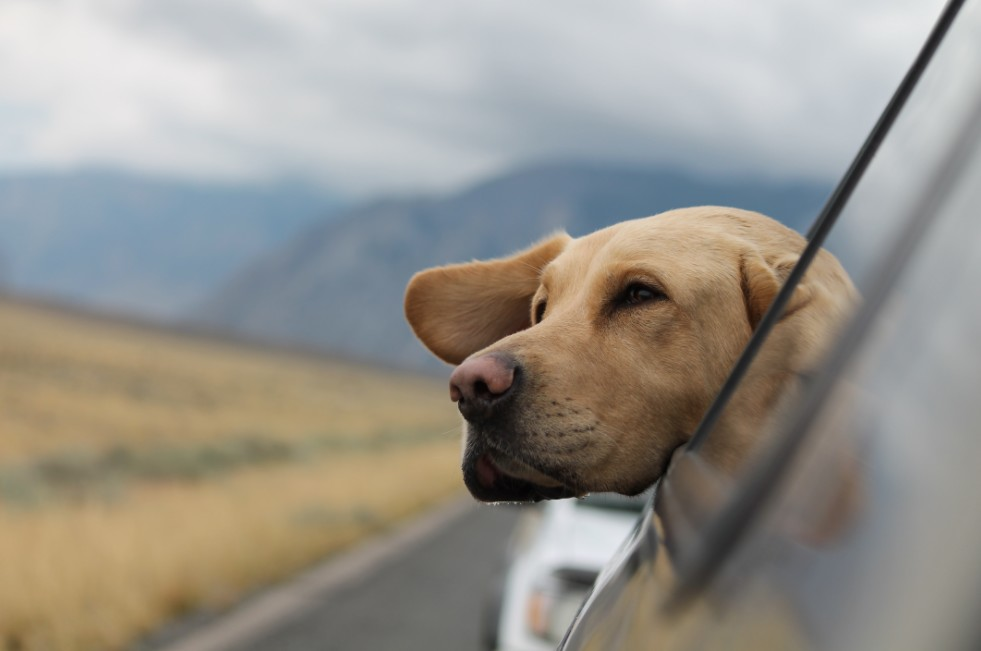 Traveling with Your Pet Done Right – How to Have a Safe Trip