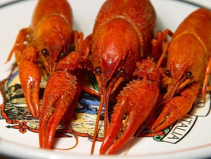 Creamy And To Cook And Eat Crawfish - The Right Way!